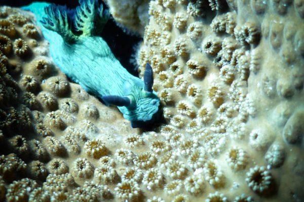 Nudi on coral