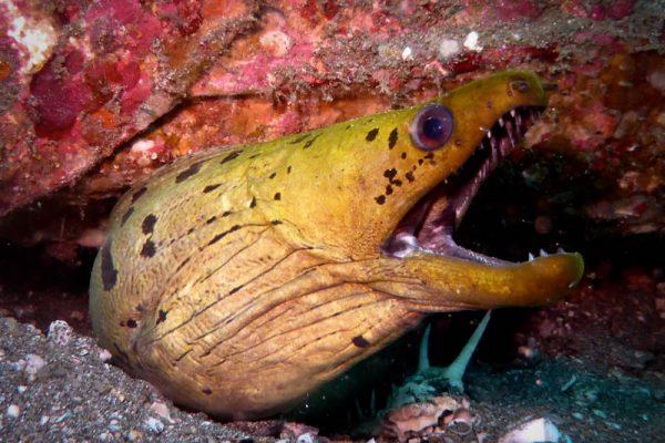 R-eel-y Pretty