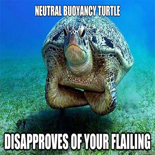 Turtle telling off divers