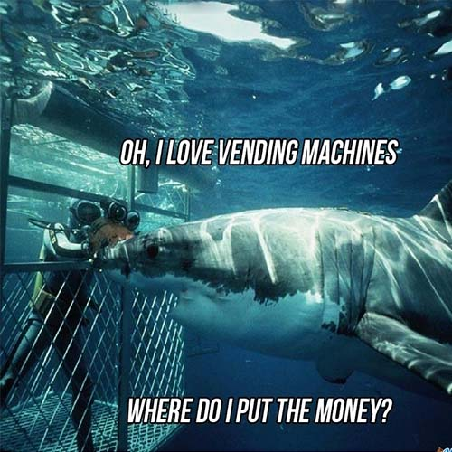 Shark looking at a cage