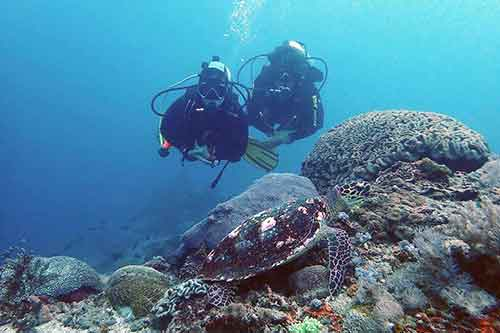 Divers with a hawksbill turtle