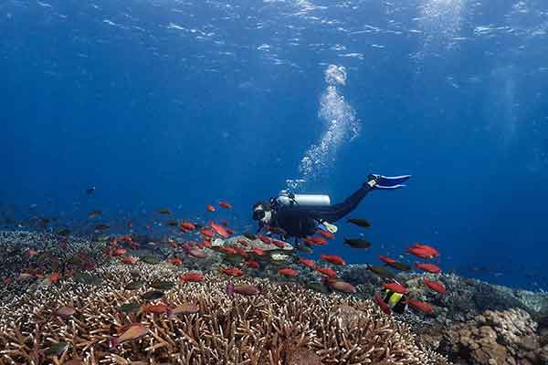 Diver with reef fish