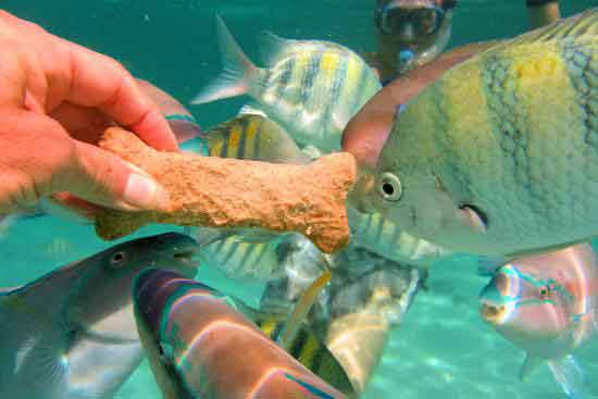 fish feeding in St Thomas