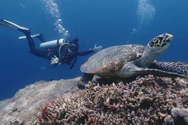 Diver and turtle