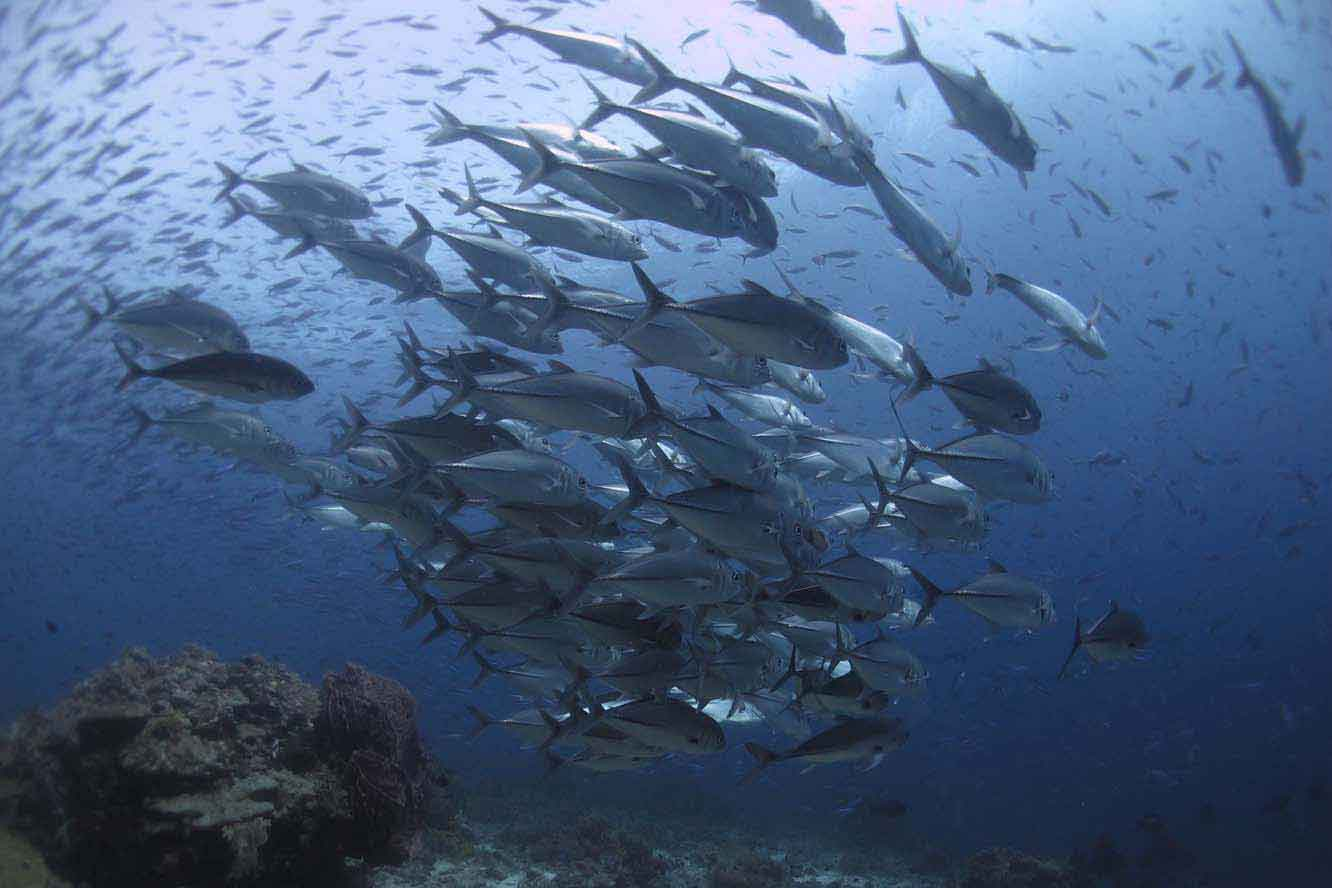 School of trevally down deep